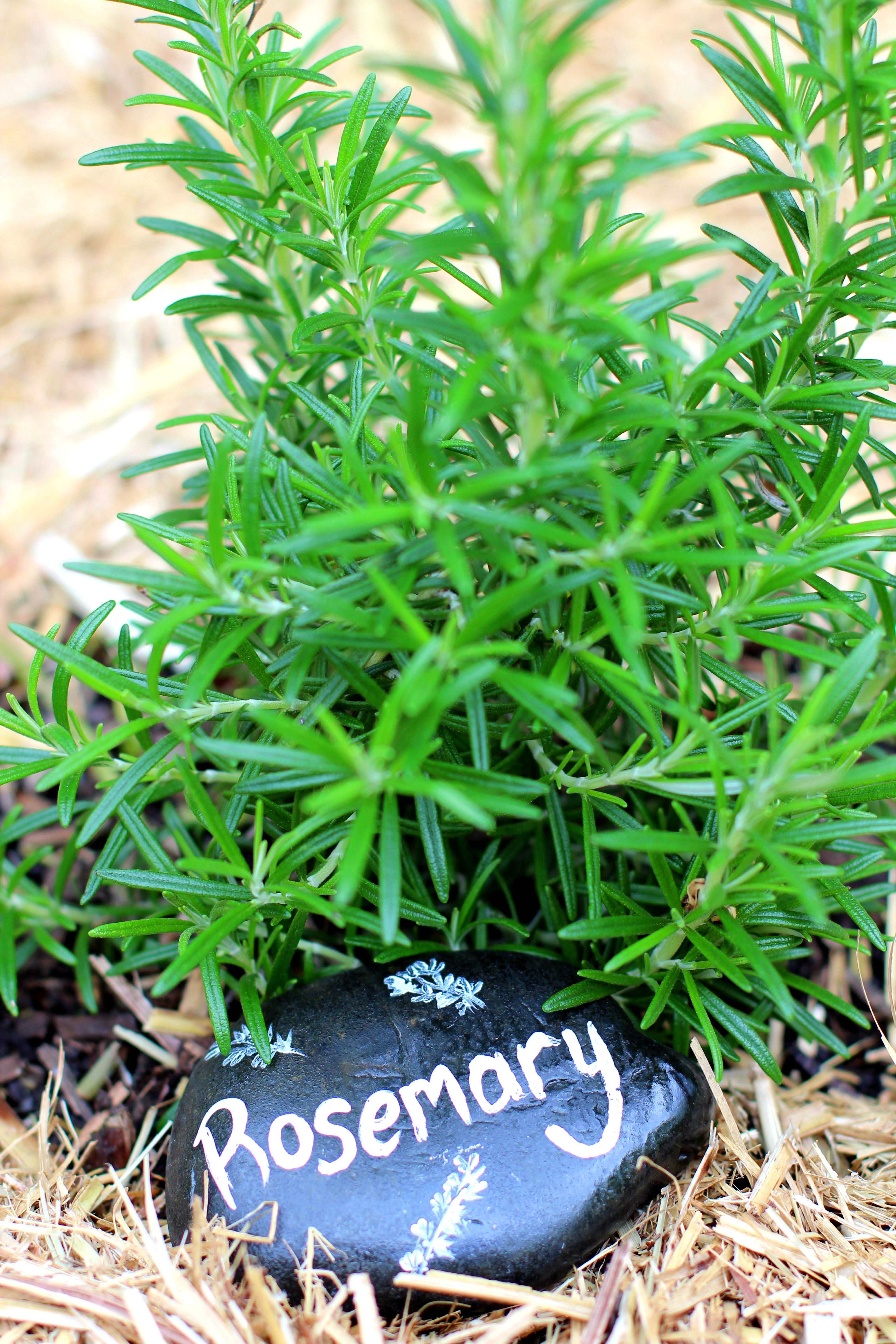 Herb Garden Stone Markers Rosemary. Purchased a bag of