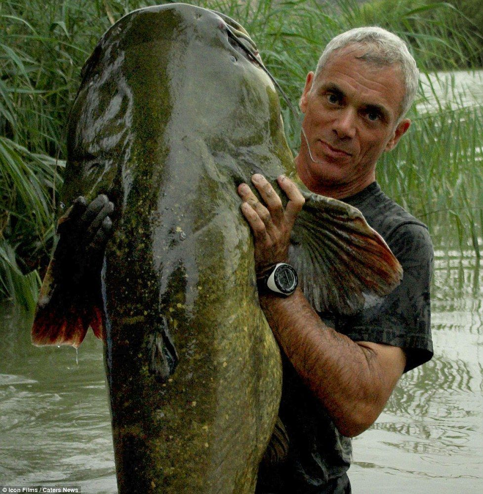 Freshwater fish killers - Heavy Load Jeremy With A Wells Cat Fish In Spain These Incredible River Monsters