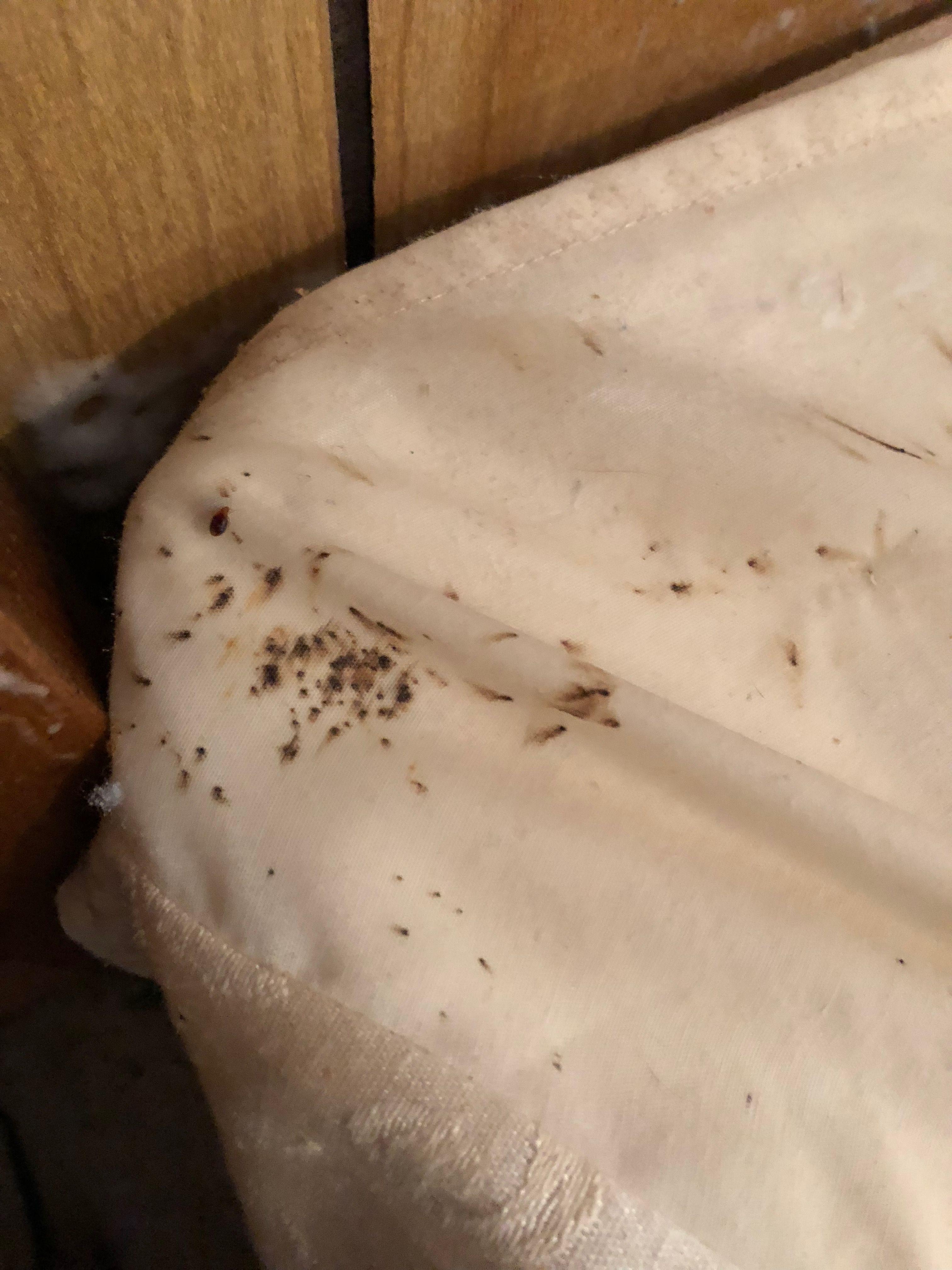 Pest Control, Exterminator, Extermination, Bug Control
