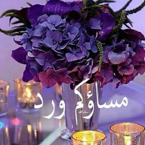 مساء الحب والجمال مساء الخير والدلال مساءكم عطر ريحانه مساء الورد
