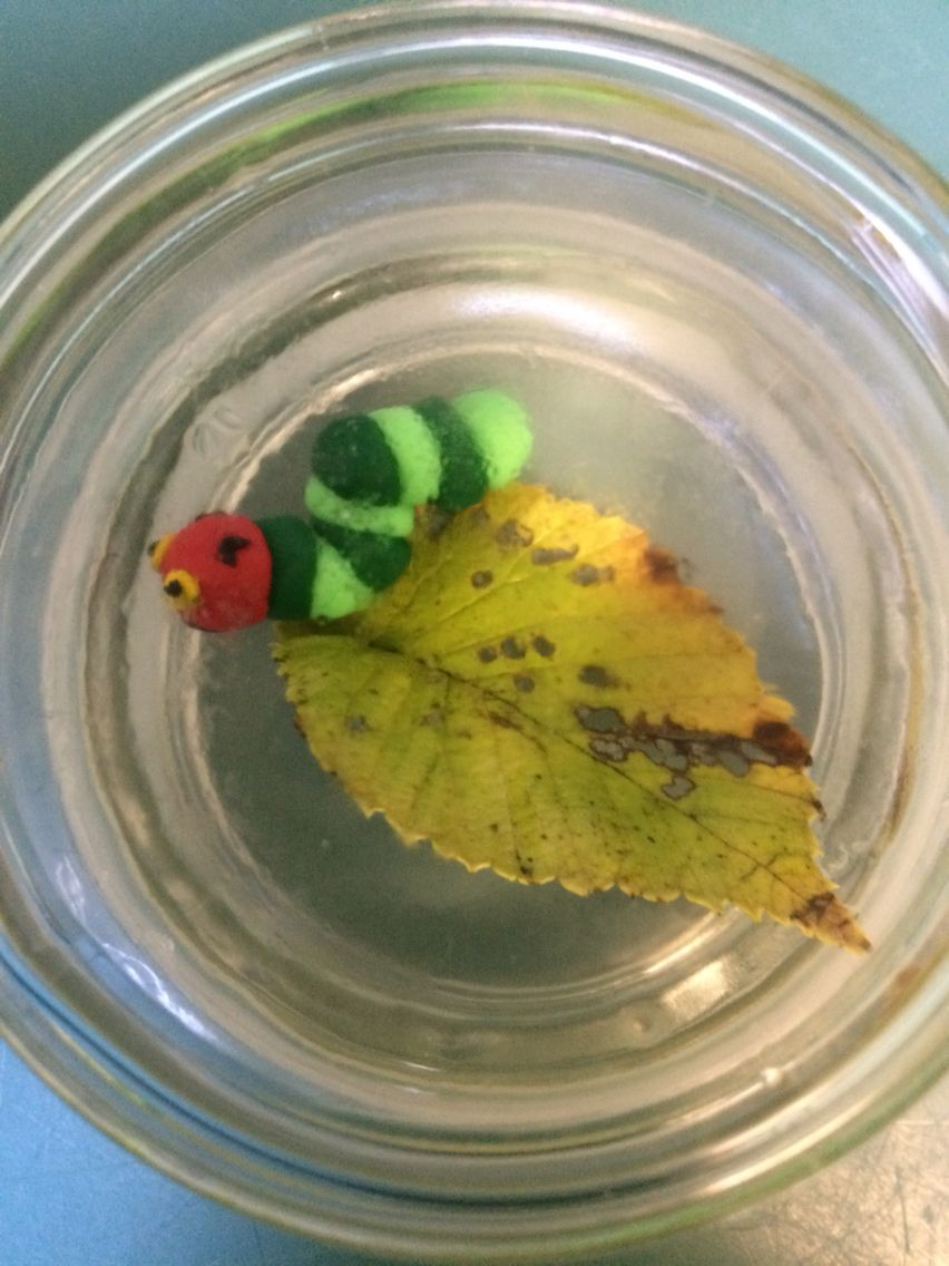 The Very Hungry Caterpillar in a Moccona jar lid | Children\'s book ...