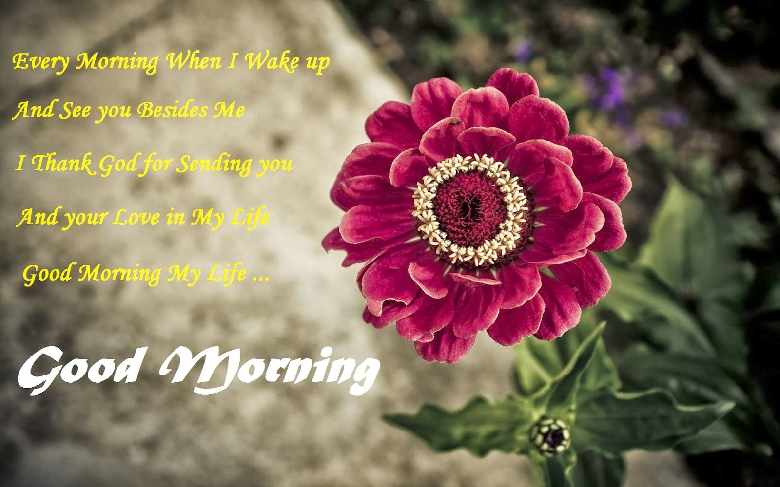 Good Morning Images With Flowers Gud Morning Flowers Good Morning Wallpaper Red Flower Wallpaper Flower Wallpaper