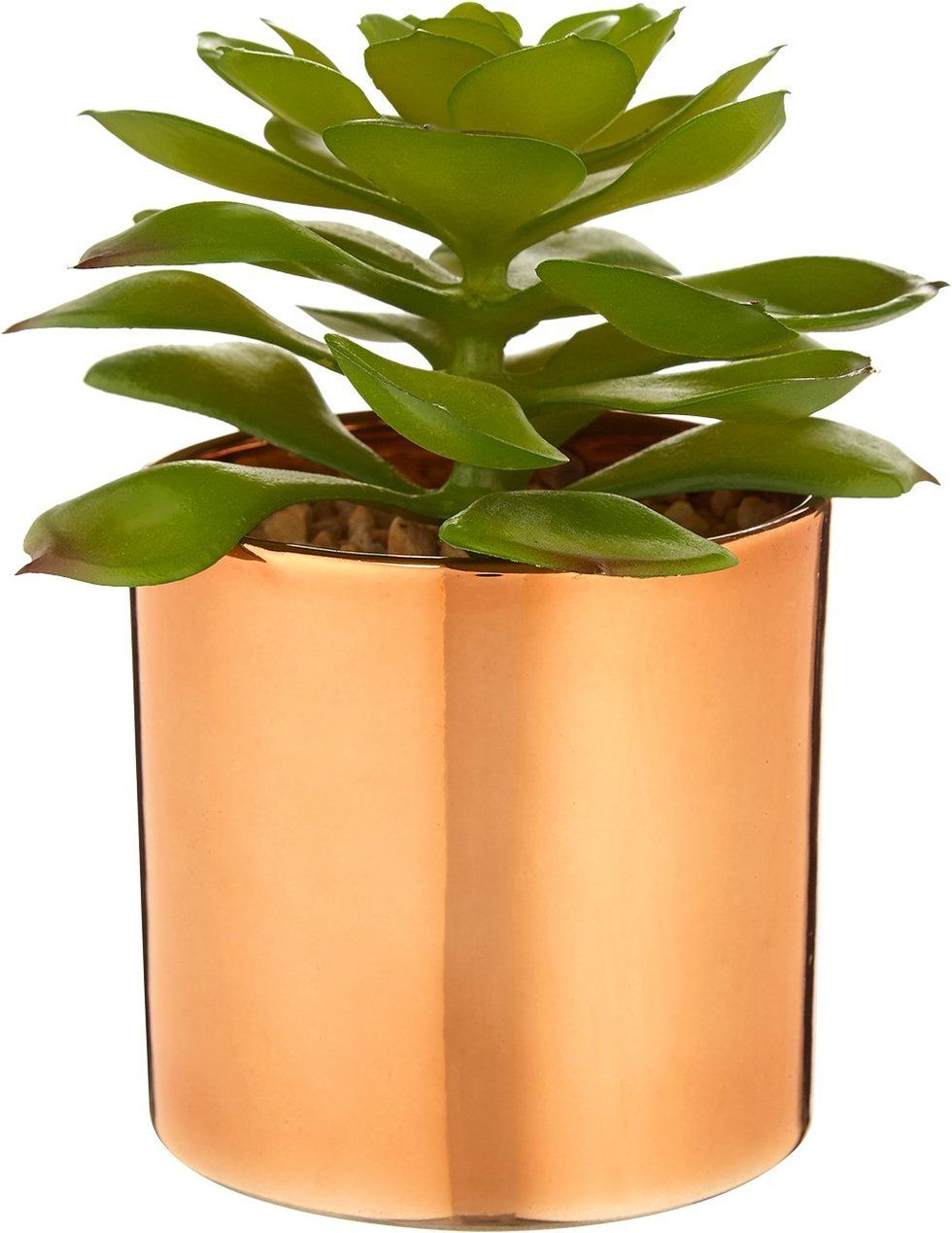 How To Fake It The Artificial Plants That Look Good Enough To Water