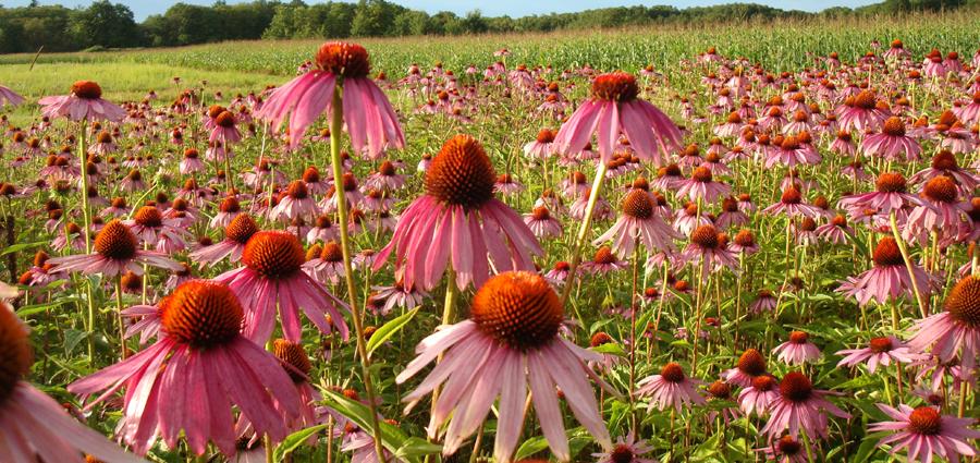 wildflower farm jardin pinterest wildflowers gardens and plants
