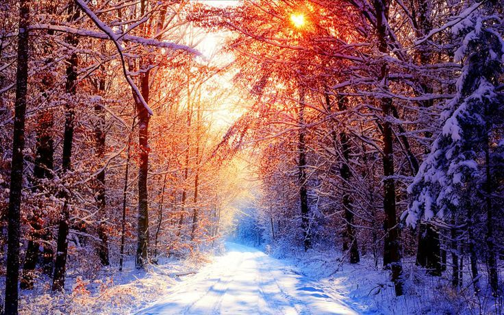 WINTER SUNRISE FORREST | Winter sunrise through the forest road | Awesomeness