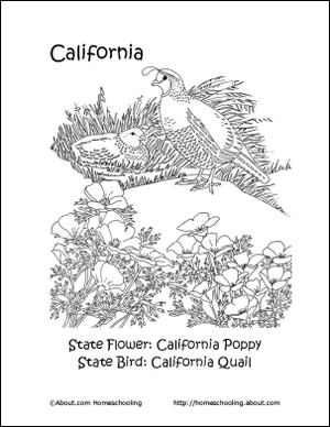 California Printables State Bird And Flower Coloring Page