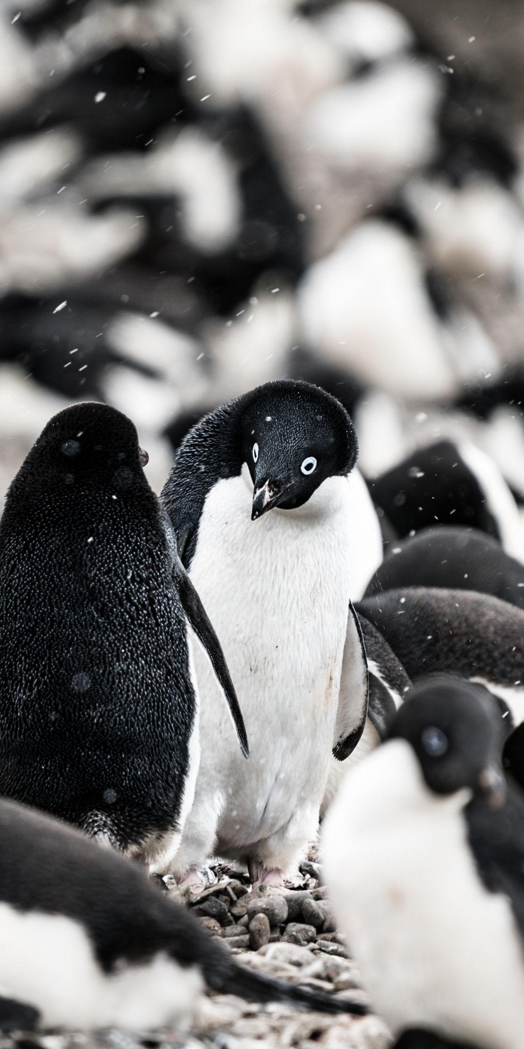 Penguin, aquatic life, herd, 1080x2160 wallpaper