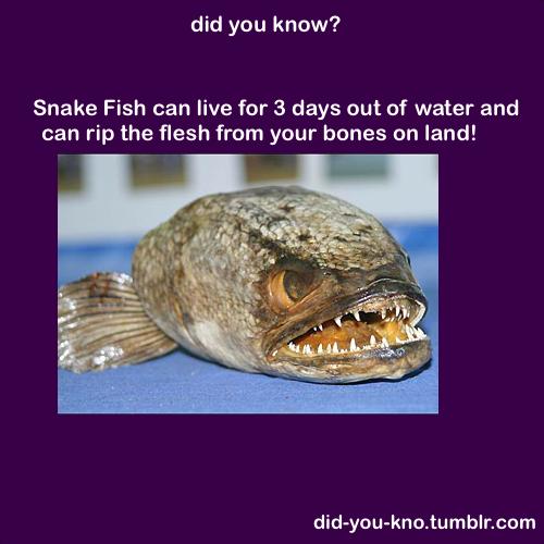 Weird Fish Facts 11