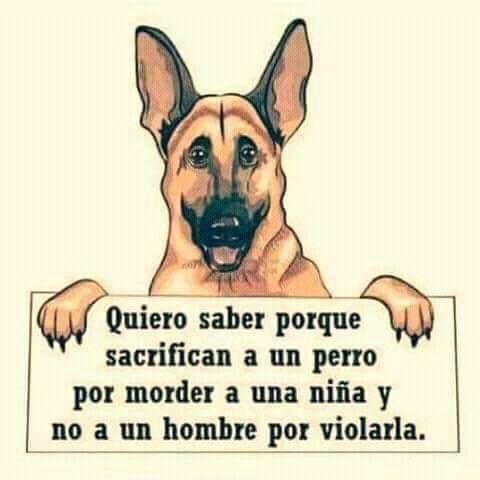 Por Que La Respuesta Es Facil Los Humanos Somos De Los Animales Mas Tontos Ni Siquiera Merecemos Llamarnos Humanos Si P Perros Animales Frases Perros Frases