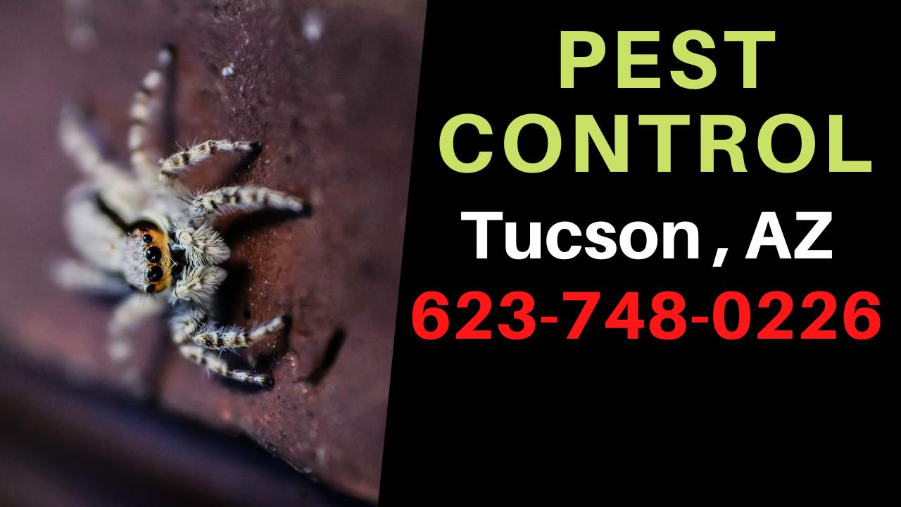 Pest Control Tucson Arizona 6237480226 in 2020 Pest