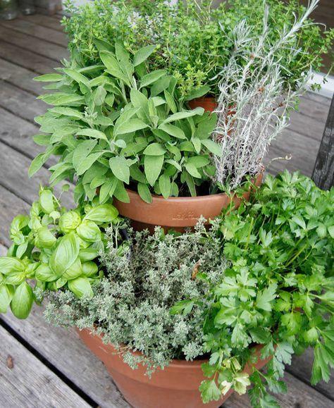 Photo of Platzsparende Ideen für einen Kräutergarten auf dem Balkon