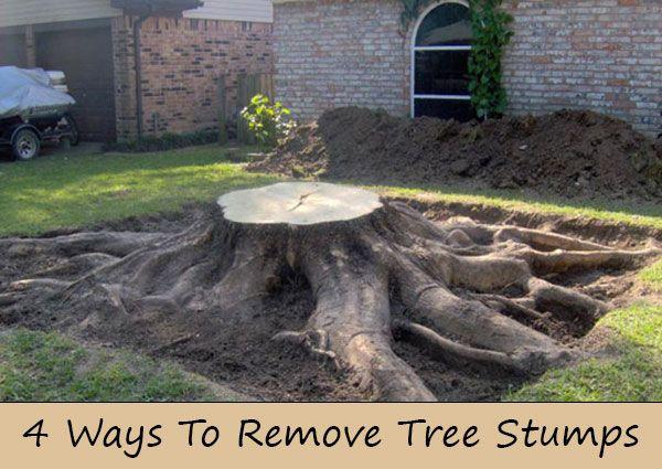 4 Ways To Remove Tree Stumps Tree Stump Stump Removal Tree Roots
