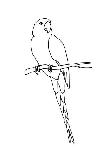 Perched Macaw coloring page from Macaw category. Select from 21913 ...