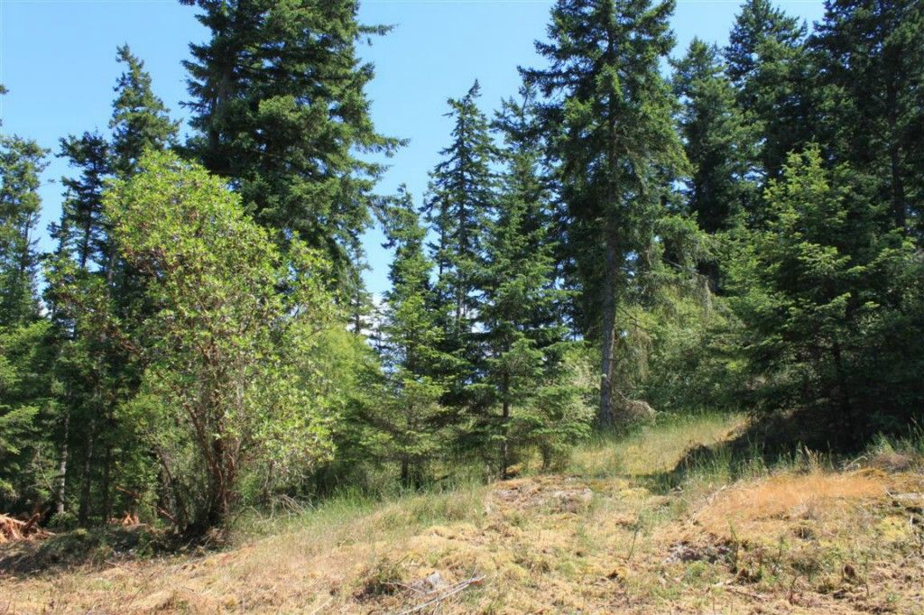 Nicely wooded, sunny and level acreage parcel near town