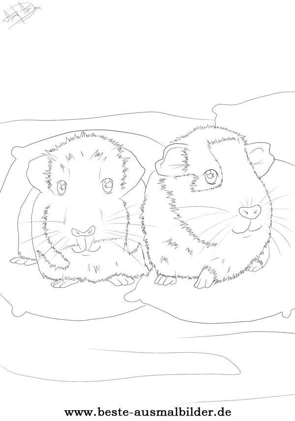 Beste Ausmalbilder Ausmalen Tiere zeichnen Meerschweinchen