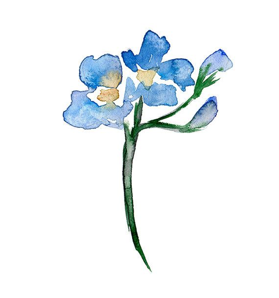 Original flower Watercolor Painting. Forget me not. Zen ...