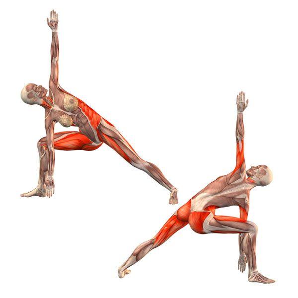 Bikram triangle right - Trikonasana Bikram variation right - Yoga ...