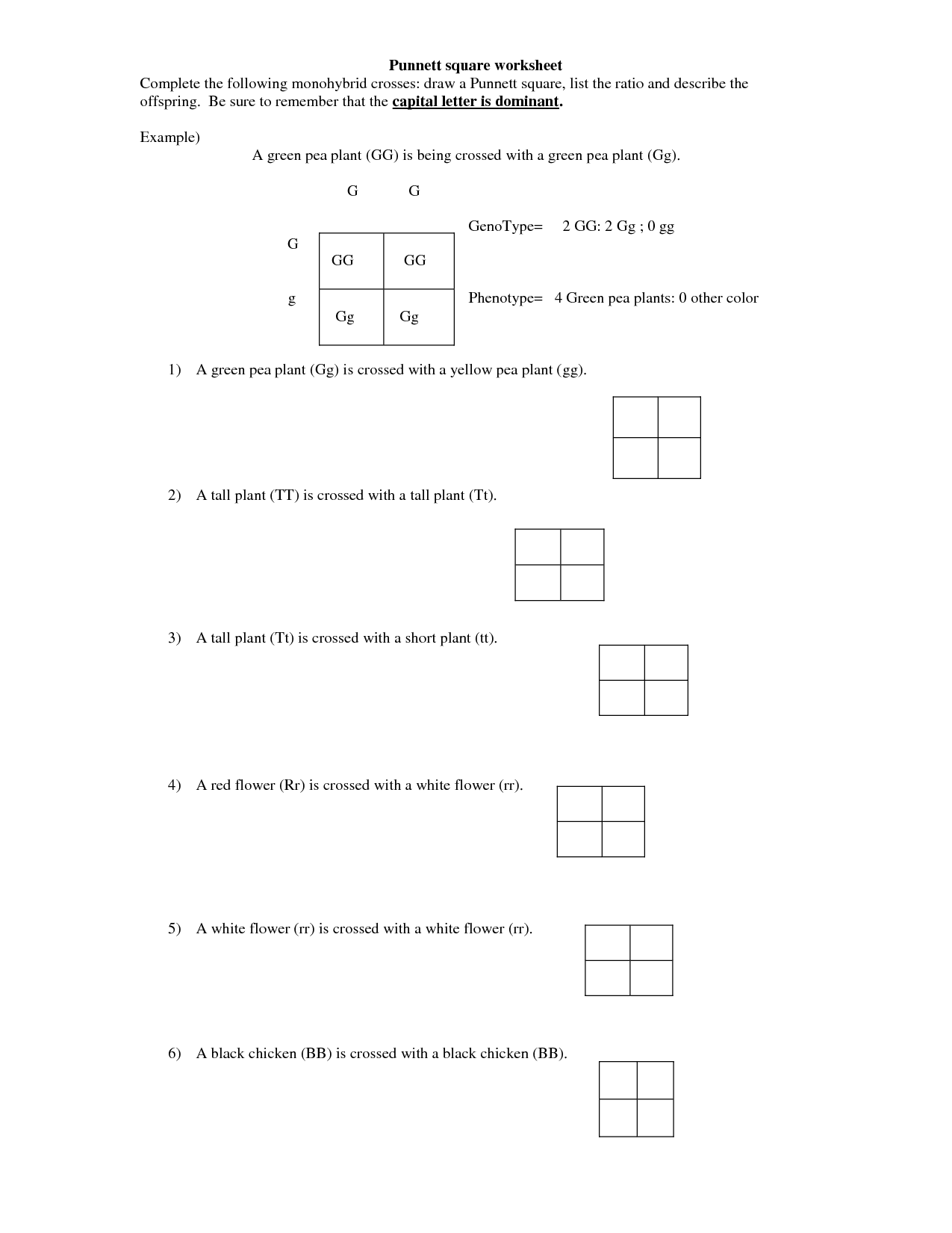 Monohybrid Cross Worksheet – Punnet Square Worksheet