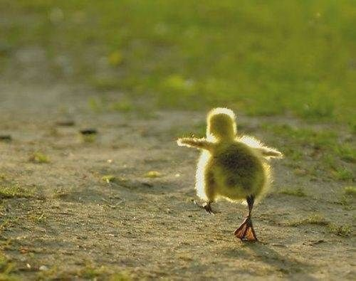 Kind of how I feel on a bad day.  My husband told me that one of my ducks is out of a row....standing joke.  :)