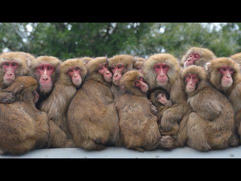 サル団子でほっと温か サル 動物 ペット