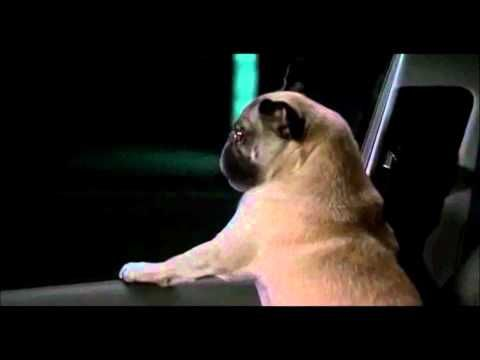 Men In Black 2 Frank I Will Survive Full Song Official Music