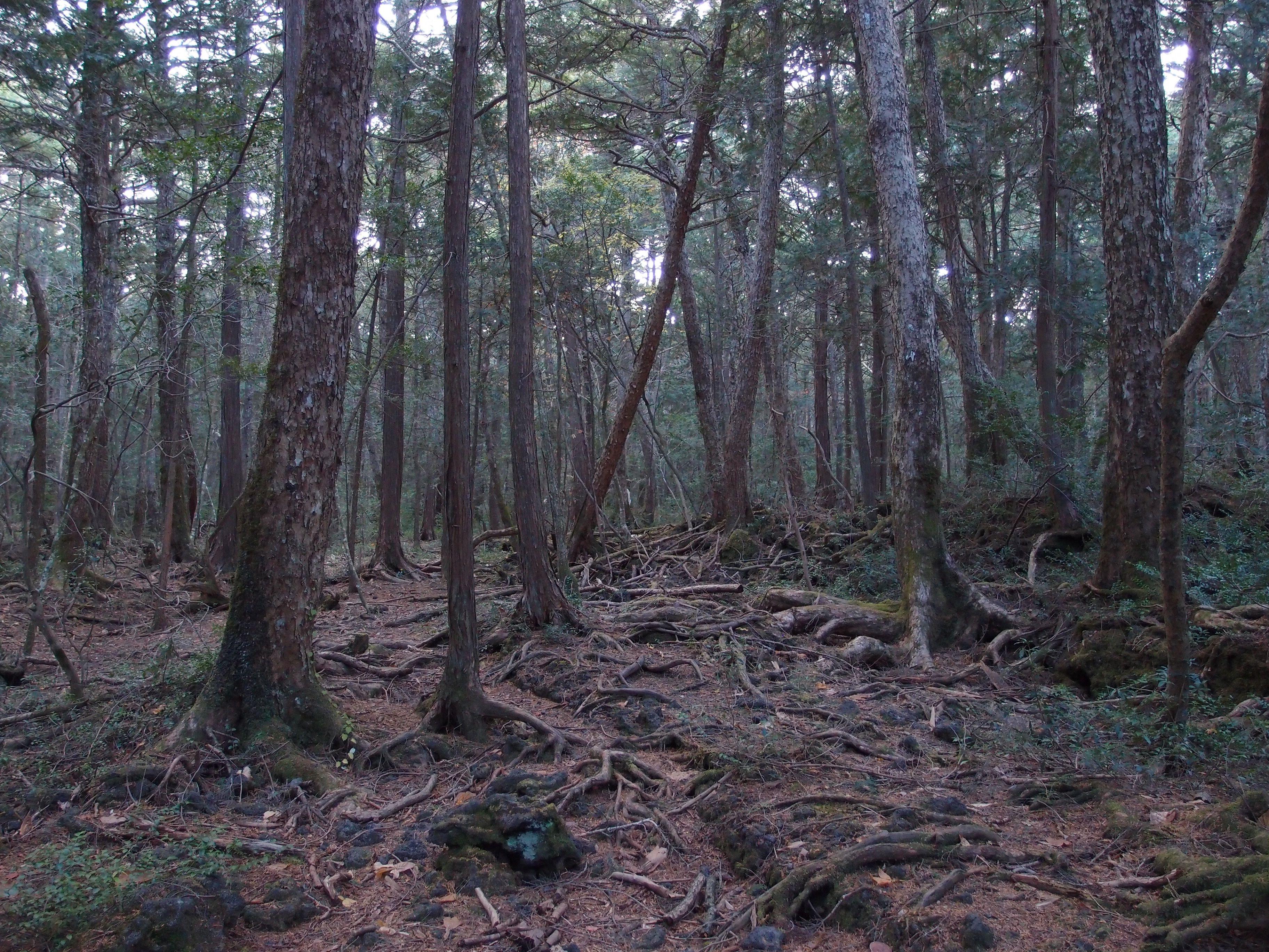 Aokigahara, el bosque de los suicidas