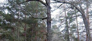 Noticias sobre ecología y medioambiente | Efe Verde - via http://bit.ly/epinner