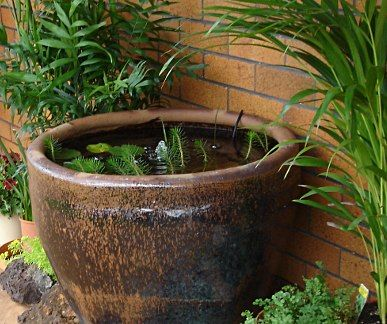 Glazed earthenware fish pond pot gardening and growing for Container ponds with fish