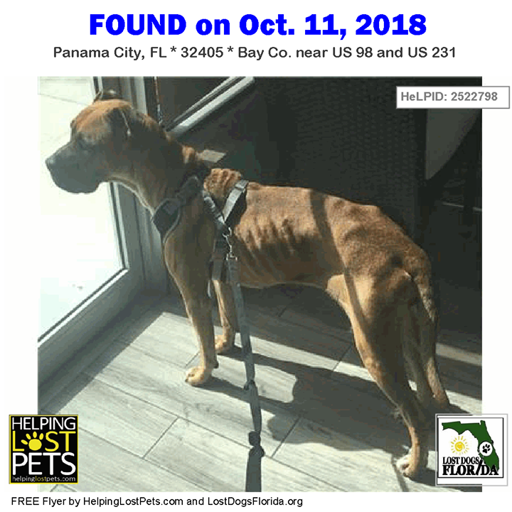 Found Dog Please Help Find This Found Dog S Family This Brown