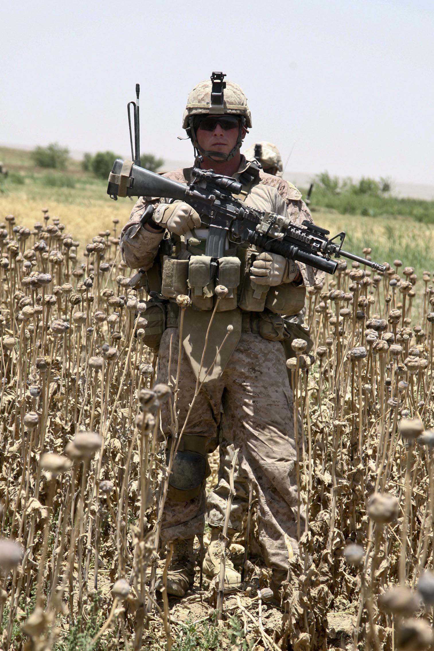 U S Troops Patrolling Poppy Fields In Afghanistan Photos