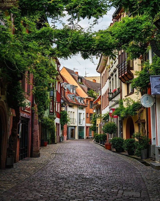 Lush vines hanging over a street in the historic Old City of Freiburg im Breisgau, a city of Baden-Württemberg, Germany.