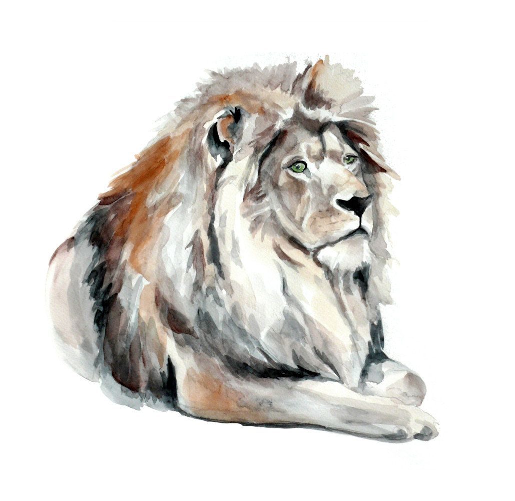 Lion Original Watercolor Painting 13x19 Fine Art Wild Animal