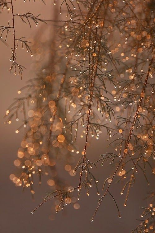 Winter Photography - Holiday Fairy Lights in Trees, Festive Winter Scene, Fine Art Landscape Photograph, Large Wall Art #fondecrannoel