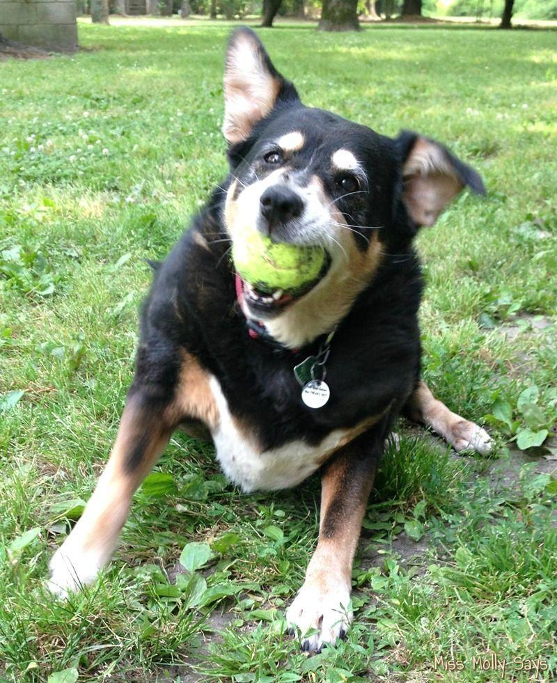 Adopting Senior Dogs Benefits