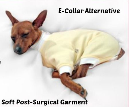 b6f12794985 Tulane s Closet Post Surgery Onesie. Dog Cover Up For After Surgery