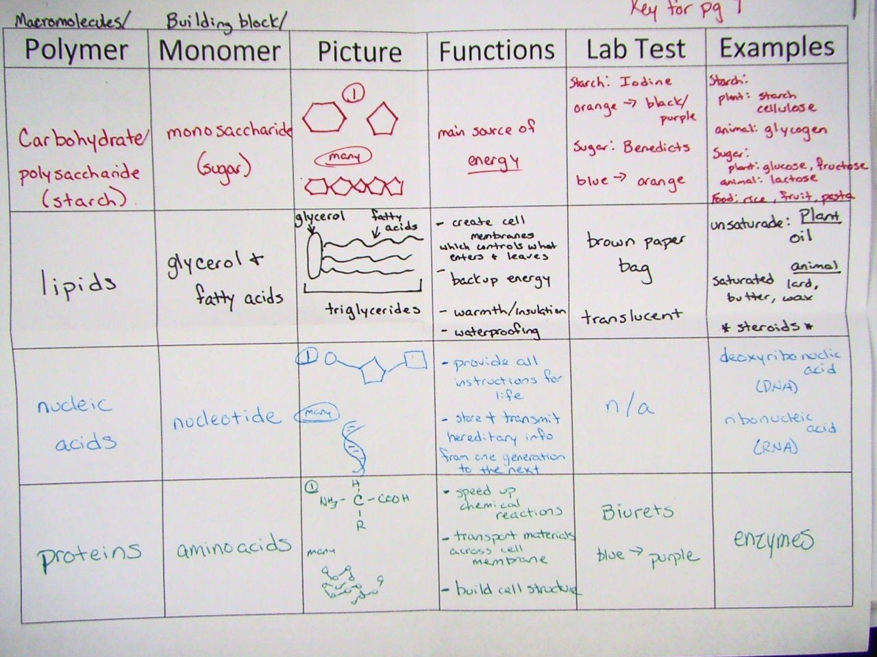 Macromolecules Chart Worksheet Answers Macromolecule Table