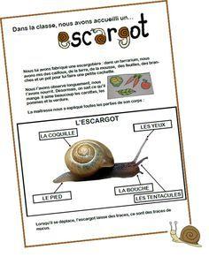escargot sciences escargot elevage escargot et escargot maternelle. Black Bedroom Furniture Sets. Home Design Ideas