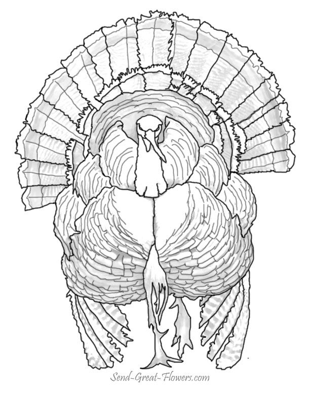 Enjoy our free Thanksgiving Day coloring pages! | Color Thanksgiving ...