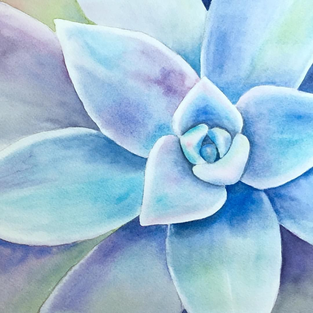 Succulent Using One Of My Favorite Cool Color Schemes What S Your