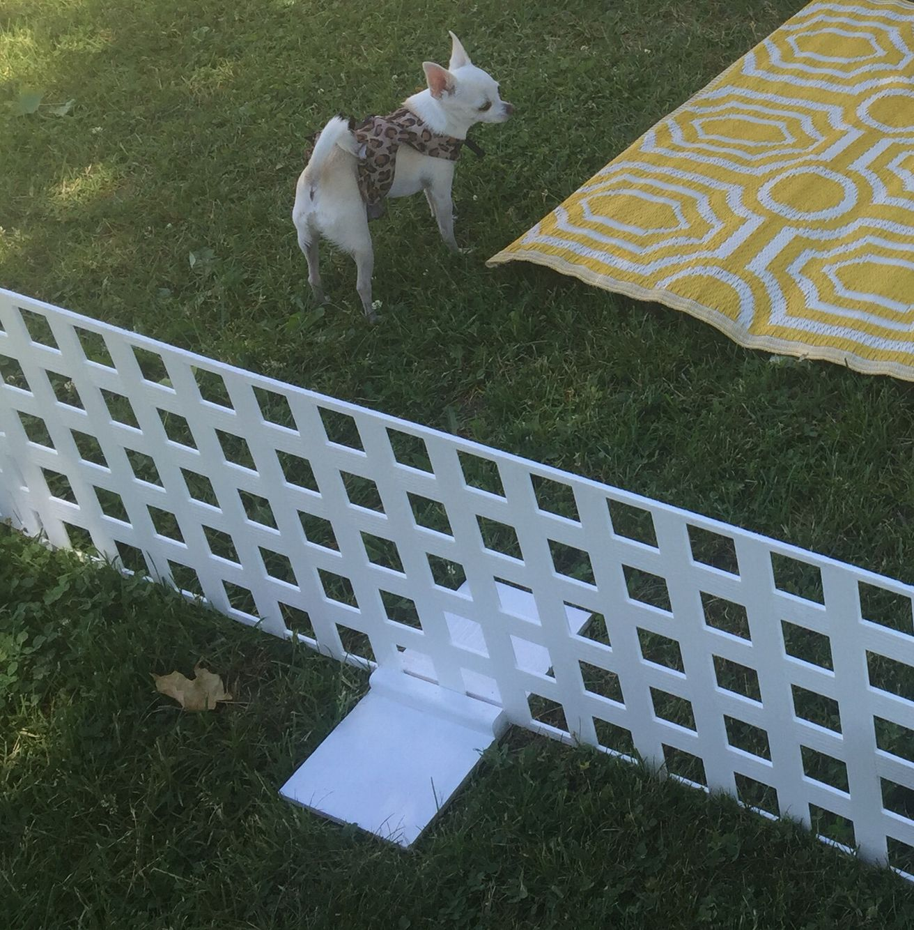 Here Is How We Built The Feet For The Free Standing Dog