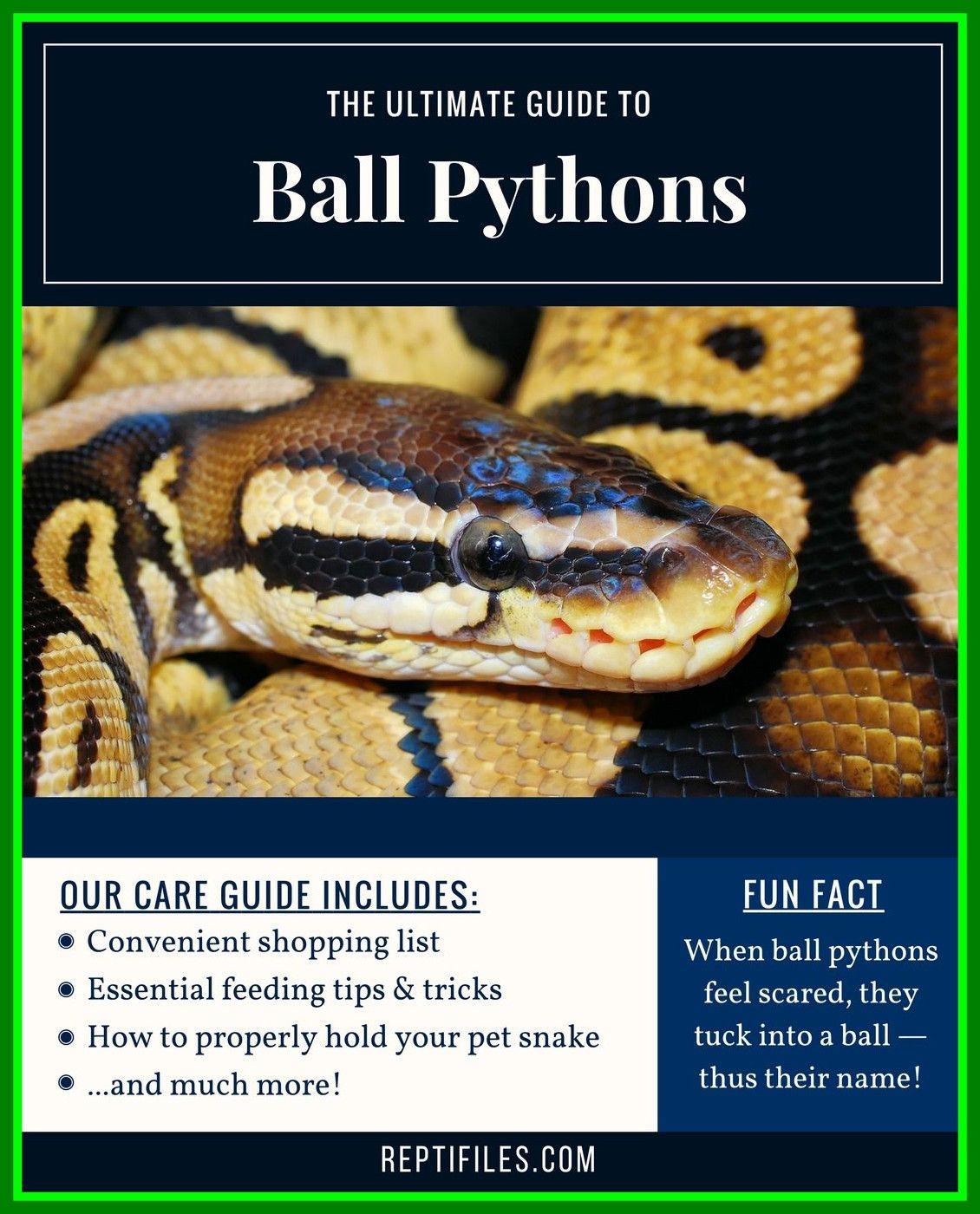 Snake Bytes: Tips on Getting Your First Snake