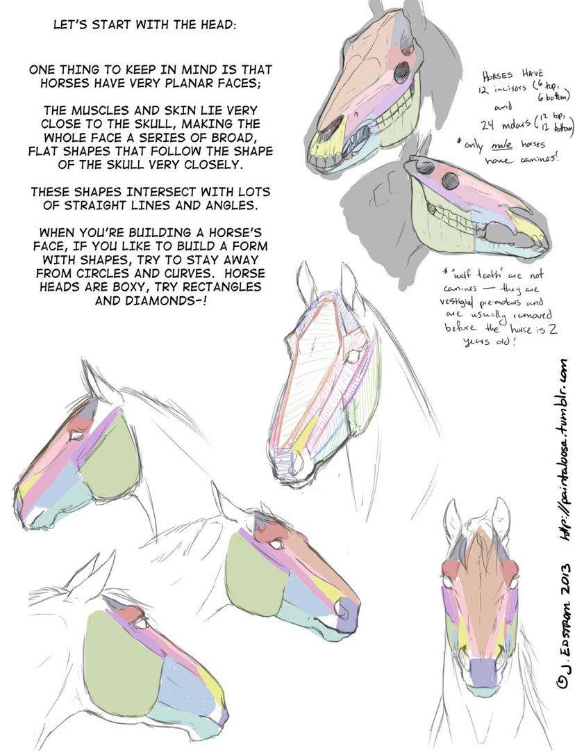 Мои закладки | Tutorials Drawing | Pinterest | Horse, Anatomy and ...
