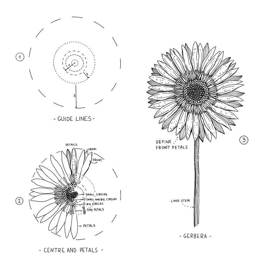 Alice On Instagram Gerbera Gerbera Tutorial An Easy Way To Draw This Beautiful Fl Flower Drawing Tutorials Flower Line Drawings Flower Art Drawing