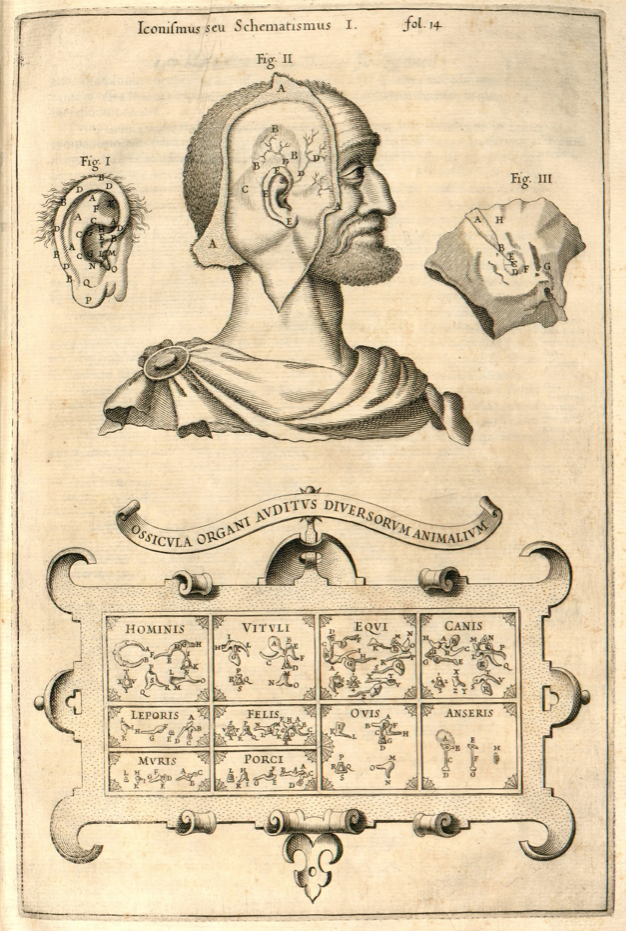 1650. Musurgia Universalis, Athanasius Kircher / sobre el oído