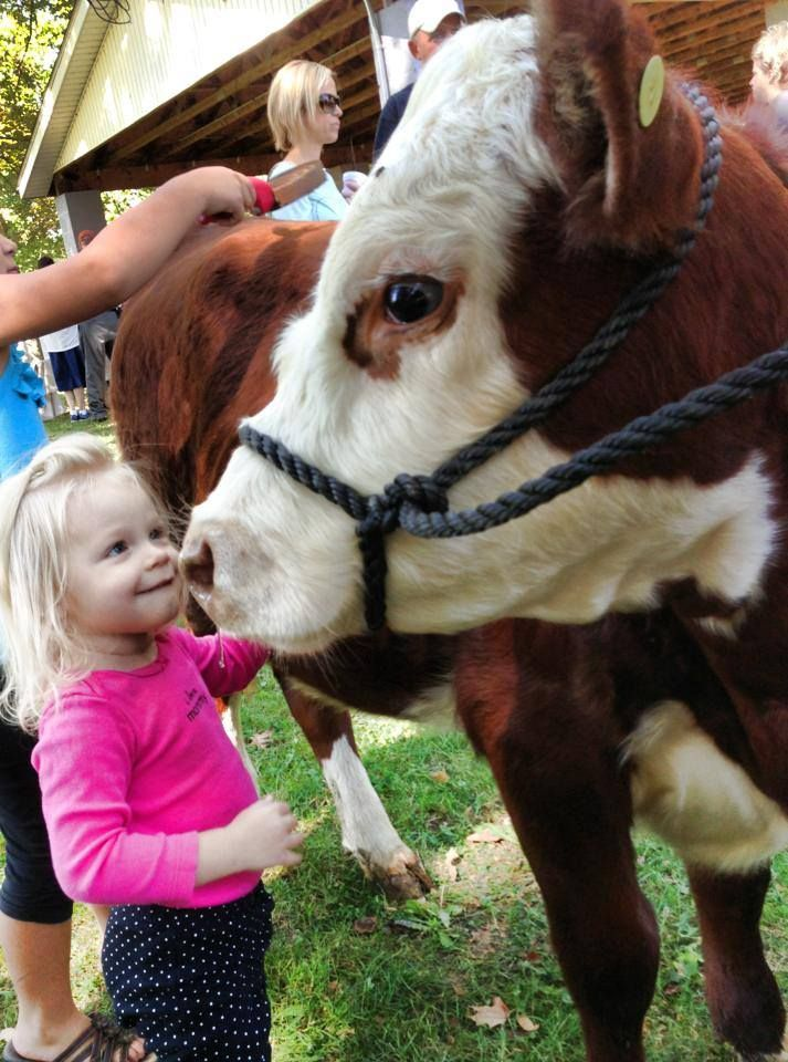 Octoberfest in Minerva!! Yep we have a cow you can pet!!! Thanks to Judy Zwick and family.