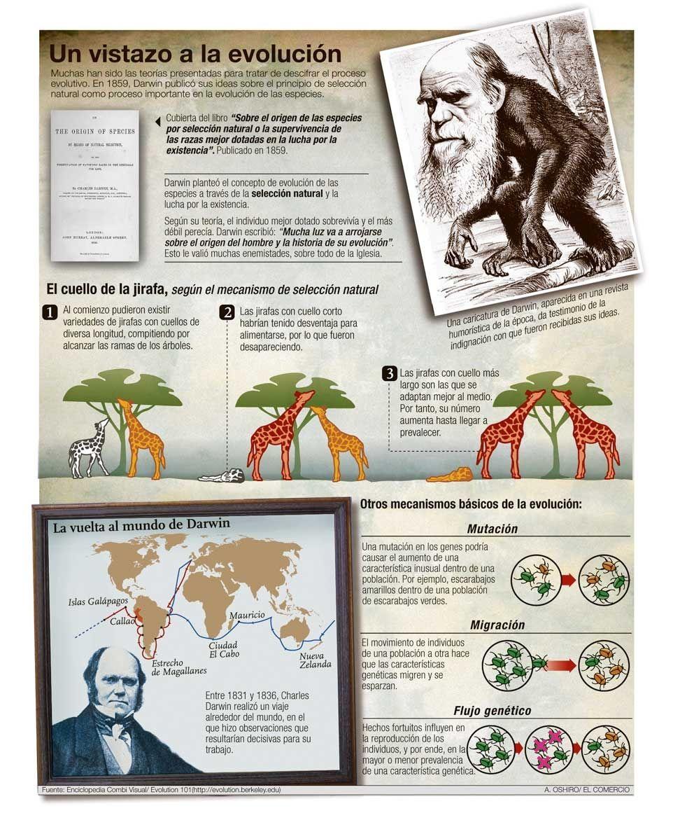 14626 Jpg 962 1181 Evolucion De Las Especies Evolucion Seleccion Natural