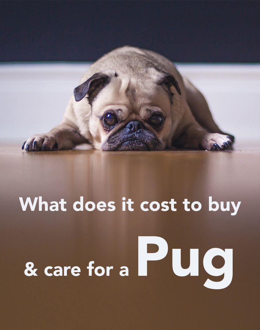 How Much Does A Dog Cost The Costs Of Buying And Owning A Dog