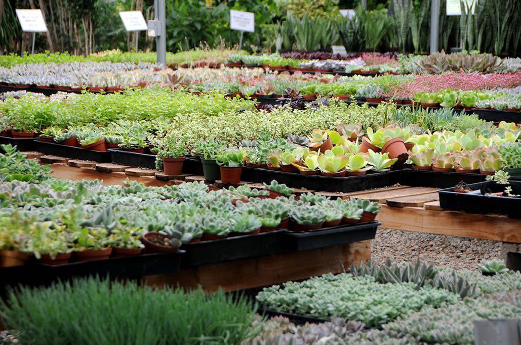 Greenhouses Succulent Nursery