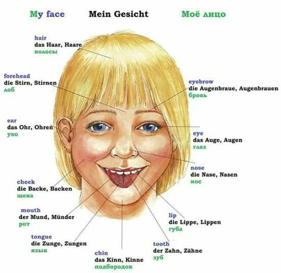Partes De La Cara Germany Pinterest Learn German German And