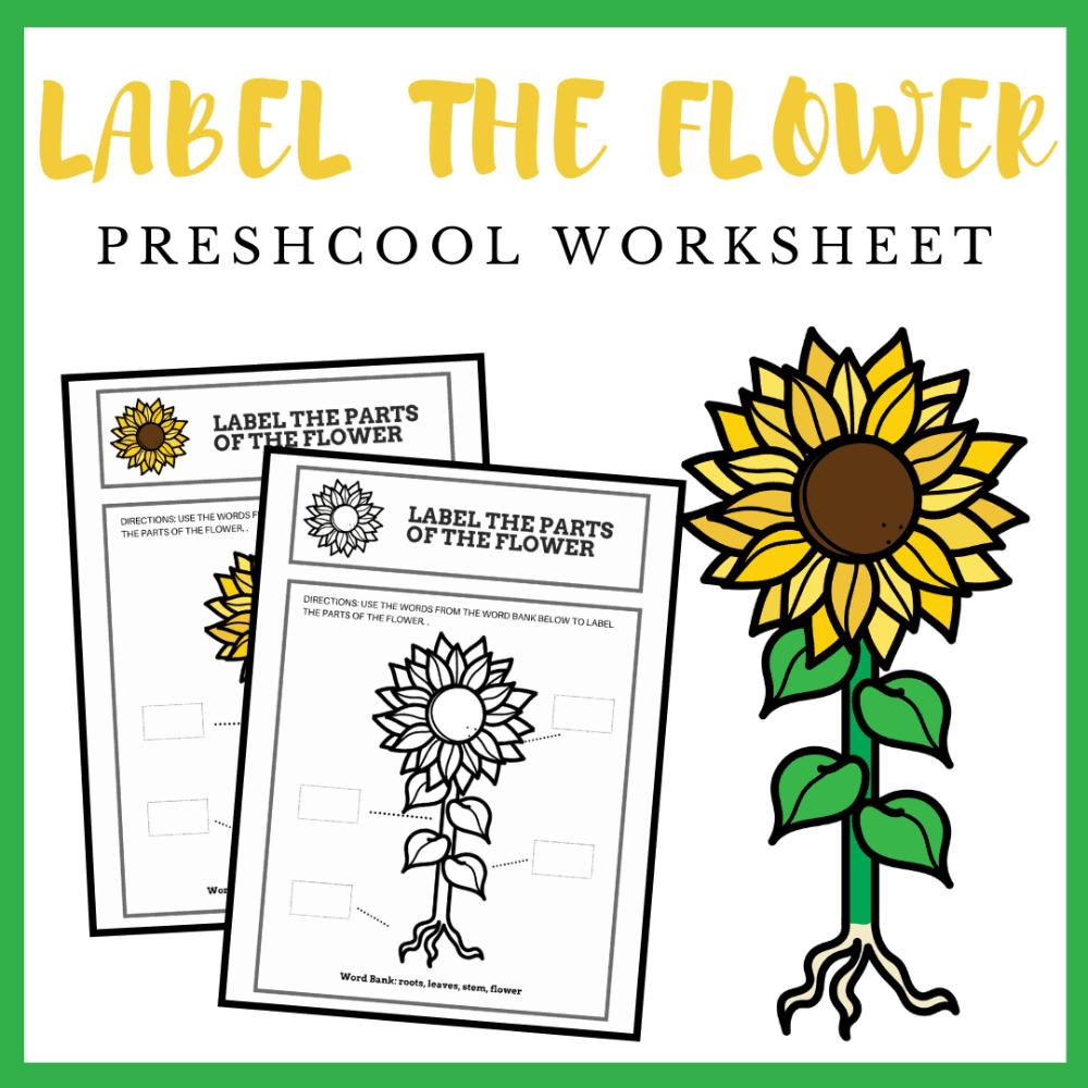 Parts Of A Flower Preschool Worksheet Preschool Worksheets Parts Of A Flower Flower Chart [ 1000 x 1000 Pixel ]